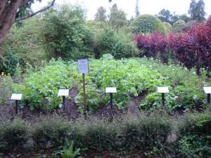 аккуратные грядки нескольких сортов картошки в саду замка Кратес